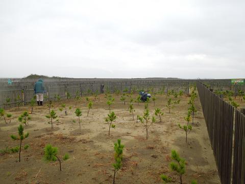 松川浦「希望の森」の草刈