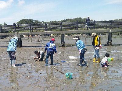 磯と干潟の生物観察