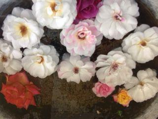 水にうかべた花