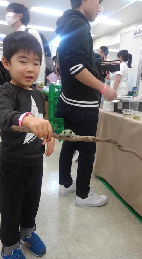 爬虫類展示会