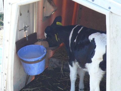 牧場 牛 素材