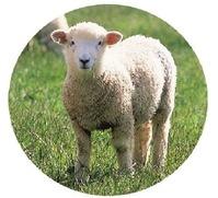 ナーシングラック羊ちゃん
