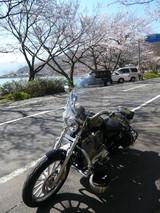 愛車と桜〜♪