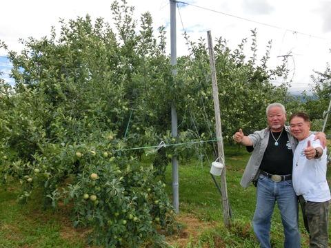 リンゴ狩り下見1