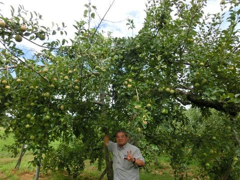 リンゴ狩り下見2
