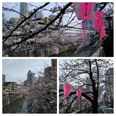 桜at目黒