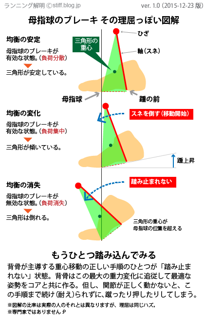 母指球のブレーキ図解