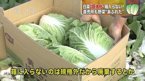関東の野菜が急激に巨大化してるらしい4.jpg