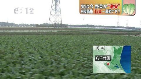 関東の野菜が急激に巨大化してるらしい2.jpg