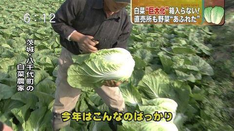 関東の野菜が急激に巨大化してるらしい3.jpg