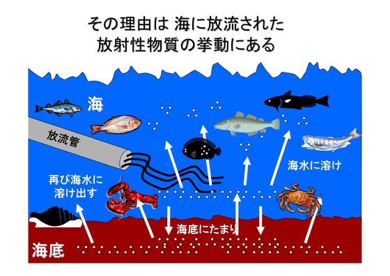 PDF◆太郎DVDー5放射能の危険性-05_02