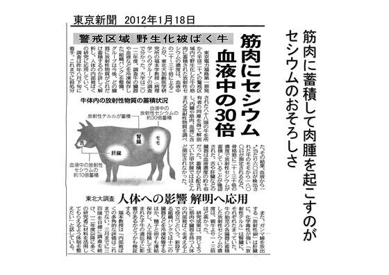 PDF◆太郎DVDー5放射能の危険性-04_01