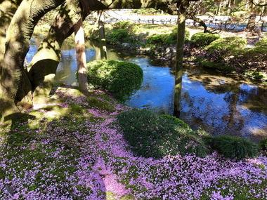 兼六園の春