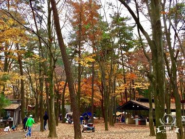 秋の清水公園キャンプ場