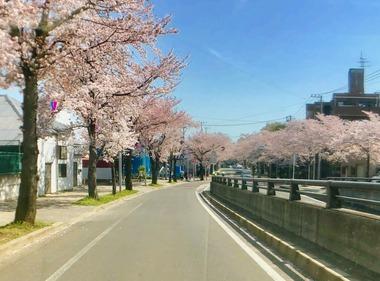 清水公園お花見