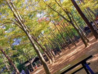 秋の清水公園