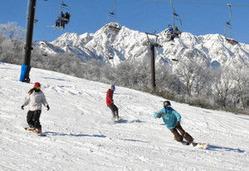 天然雪のゲレンデを滑走するスノーボーダー=白馬村の白馬五竜スキー場で