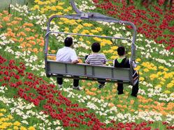 ハンターマウンテンゆりパークに咲き誇る花々を愛でるなら、フラワーリフトを利用するのがおすすめ。リフト片道料金は、大人¥600、小学生¥400、ペット¥400(未就学児無料)