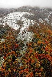 初冠雪した氷ノ山の山頂付近。周辺にはまだ紅葉した木々が残る=兵庫県養父市で2010年10月27日、本社ヘリから小川昌宏撮影