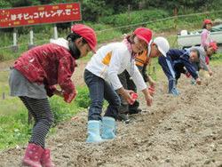 ゲレンデにコスモスの種をまく児童=小松市大倉岳高原スキー場で