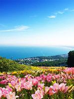 石狩湾を一望できるゆり園