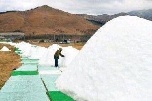 12月1日のオープンを前に造雪機によって2〜3メートルの雪の峰が連なった九重森林公園スキー場のゲレンデ