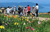 琵琶湖をバックに来場者の目を楽しませている色とりどりのユリの花(高島市今津町日置前の箱館山)