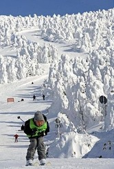 見頃を迎えた樹氷の中を滑るスキーヤー(蔵王温泉スキー場で)=飯島啓太撮影