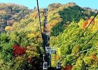 標高が上がるにつれて色づきを増す木々=31日、阿智村のスキー場「ヘブンスそのはら」
