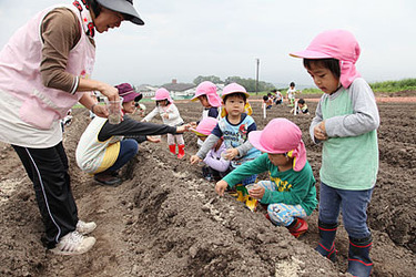 ゲレンデの畑にキバナコスモスの種をまく園児たち