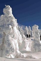 自然が造り出す、様々な姿形の「モンスター」が林立する樹氷平