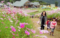ゲレンデに咲くコスモスを楽しむ家族連れ=砺波市五谷のとなみ夢の平スキー場で