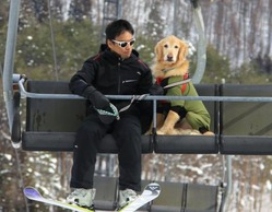 不安そうな表情を浮かべ、リフトに乗る永井祐二さんの愛犬「ごはん」=長野県白馬村の白馬さのさかスキー場で、大島英吾撮影