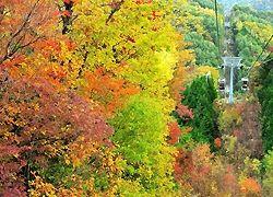 紅葉が見ごろを迎えた富士見台高原ロープウェイ周辺