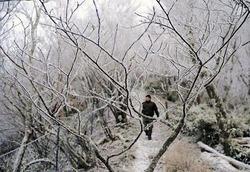 宮崎県五ヶ瀬町の「五ヶ瀬ハイランドスキー場」では今季初めて霧氷が見られた=門岡裕介撮影