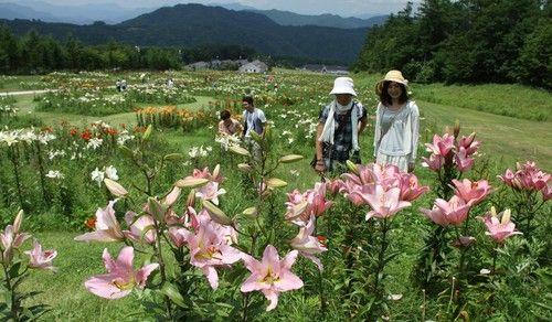 咲き誇るユリの花に見入る来園者たち=那須塩原市湯本塩原で