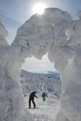大きく成長した樹氷の間を滑るスキーヤーら=山形県山形市の蔵王温泉スキー場で21日、手塚耕一郎写す(毎日新聞)