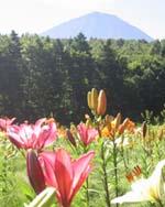富士山の麓 関東最大級のゆり園 ふじてんリゾート リリーパーク