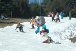 オープンしたスキー場でスノボの腕前を披露するゆるキャラの「玄さん」=19日、兵庫県豊岡市(山田淳史撮影)(写真:産経新聞)