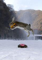 中国・湖南省三門峡で開催されたペットと飼い主のためのスキー競技に参加したウサギとカメ(2014年1月12日撮影)。