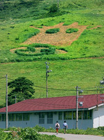 福井県奥越高原牧場の牧草地にお目見えした巨大な牛の顔=大野市南六呂師