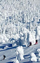 写真=好天の下、樹氷群を縫うように滑走するスノーボーダー=21日午後1時すぎ、八甲田の田茂萢岳