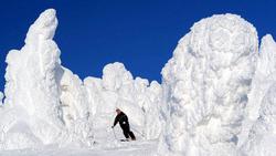 蔵王の樹氷。30〜40年後には姿を消してしまうかもしれない=山形市の蔵王温泉スキー場で2011年2月2日、丸山博撮影