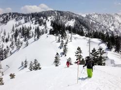 スキーヤーらが道に迷わないよう、町の山岳救助隊員らが竹ざおを設置した=湯沢町の神楽ケ峰、町提供