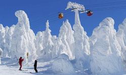 巨大に成長した樹氷群=山形市の蔵王温泉スキー場で、丸山博撮影