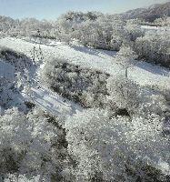 冷え込みで一面霧氷に包まれた、宮崎県五ヶ瀬町のスキー場周辺=読売ヘリから、貞末ヒトミ撮影