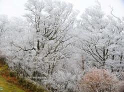 五ケ瀬町の向坂山で今季初めて確認された霧氷=11日午前