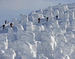 樹氷の間を登るスキーヤー(蔵王温泉スキー場で)=池谷美帆撮影