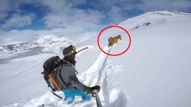 とある雪板滑走者の迷子馬救助録