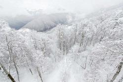 2014年ソチ冬季五輪の会場の一つになっているリゾート地ローザクトール近くの山肌と木々に積もる雪(2013年2月19日撮影)